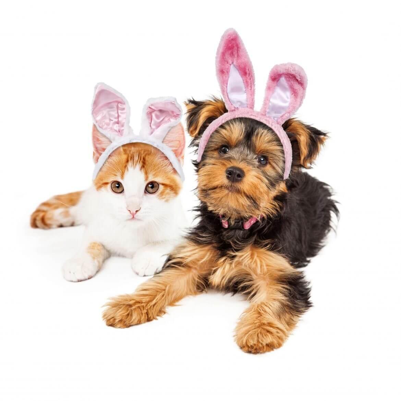 Older Dog Pet Insurance Australia
